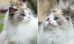 瑞典一猫咪被当公主养