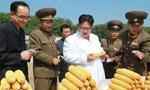 金正恩视察朝鲜人民军第810部队所属农场