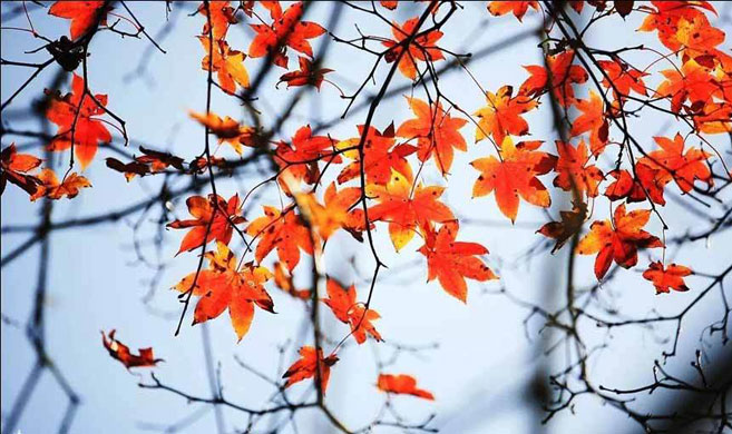 最美秋景攻略:川西的秋叶从不负你