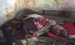老伴去世女婿入狱 78岁老人饿得吃被子棉花