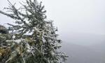 太白山上雪花飘 游客大呼大美太白