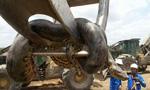 巴西工人修建水库时发现10米长巨型水蟒