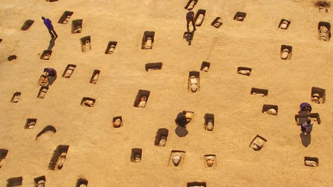河北黄骅出土110余座瓮棺葬