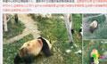 网友称兰州动物园虐待大熊猫 国家林业局介入调查