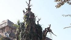 """奇特""""神仙树""""亮相常州太湖湾"""