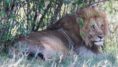 """肯尼亚的""""野生动物天堂"""""""