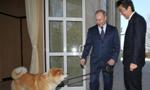 日本赠狗外交失败遭网民嘲弄:安倍真是个小丑
