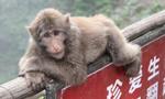 """游客称在峨眉山游玩被收取15元""""猴子险"""" 景区回应"""