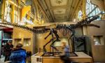 法国买家拍下7米长恐龙骨架化石