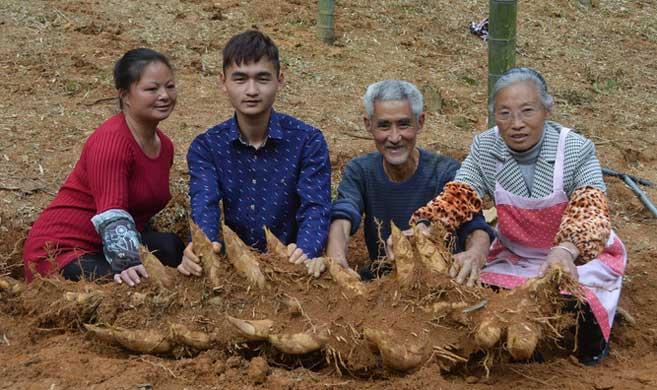 稀奇!遂昌1米长的竹鞭长了18根冬笋