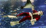 """""""圣诞老人""""喂鱼"""