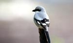 在纳布卢斯驻足的鸟类