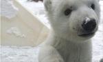 盘点动物初见白雪的呆萌瞬间
