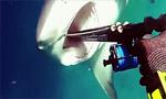 食人鲨突袭潜水者 男子用捕鱼枪堵其嘴