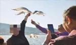 游客为和红嘴鸥拍照 竟将其翅膀折断