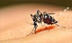 巴西米纳斯吉拉斯州黄热病爆发 死亡病例上升至47人