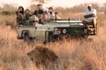 """""""游客若在南非被野兽撕咬会被击毙""""系谣言"""