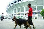 万元名犬被盗走烹食 因没办证每斤赔8元?警方回应