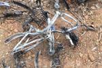 """成都十余辆共享单车被烧成""""光杆杆"""" 警方介入调查"""