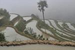 大雾中的云南元阳梯田