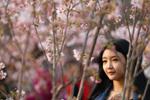 玉渊潭公园游客赏樱踏春