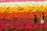 鲜花盛开迎游客