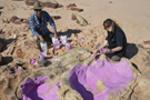 澳大利亚发现世界最大恐龙脚印 脚印里能躺人