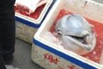 """珠海疑现当街宰杀""""海上大熊猫""""白海豚 渔政:正在调查"""