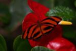 墨西哥城动物园开启蝴蝶观赏月