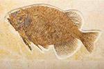 贵州瓮安一座矿山挖掉地球6亿年历史