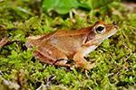 丽水峰源发现蛙类新种 升格省级自然保护区
