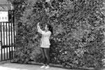 宁波首个种植毯垂直绿化墙亮相