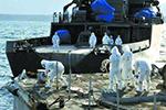 为确认安全性 日本演示福岛去污土壤再利用试验