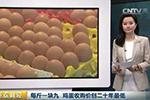 鸡蛋收购价每斤1.9元创二十年最低 养殖户贱卖母鸡