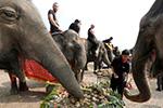 """泰国野象变""""劫匪"""" 专门拦下运水果货车抢菠萝吃"""