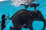"""泰国大象化身泳坛""""健将"""" 与象夫玩潜水"""