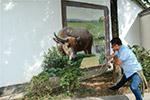 浙江安吉:艺术墙画扮靓村庄