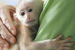 杭州街头现落单珍贵藏酋猴:已难回山林生活
