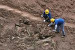 重庆发现世界级恐龙化石遗址
