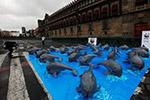 全球仅存30只!环保组织呼吁拯救加湾鼠海豚
