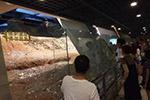 """杭州雷峰塔遗址被扔成""""钱山"""" 你们有办法吗?"""
