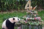 """旅韩大熊猫""""爱宝""""""""乐宝""""庆生"""