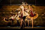 约堡芭蕾舞团舞剧《大城市,大梦想》开演在即