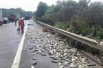 运鱼车高速路侧翻 两吨活鱼都被晒死