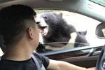 八达岭野生动物园游客开窗投食 被黑熊咬伤手臂