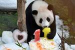马来西亚为中国旅马大熊猫庆祝生日