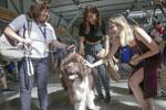 温哥华机场引入宠物狗助旅客减压