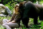 英夫妇探望老朋友大猩猩 画面暖心