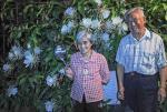 八旬老夫妻50年种出年开300朵的昙花树