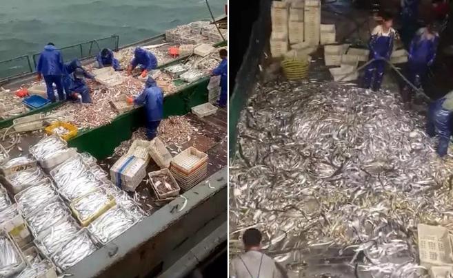 冬汛第一水 来看嵊泗渔老大发来的画面